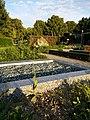 Crepis pulchra sl64.jpg
