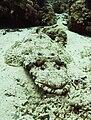 Crocodilefish2.jpg