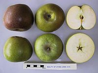 Cross section of Beauty of Stoke, National Fruit Collection (acc. 2000-019).jpg