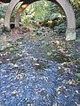 Crystal Springs Rhododendron Garden, Portland (2013) - 23.JPG