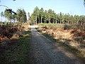 Cyclepath through Deerleap Inclosure - geograph.org.uk - 1306542.jpg
