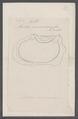 Cynthia microcosmus - - Print - Iconographia Zoologica - Special Collections University of Amsterdam - UBAINV0274 092 01 0038.tif