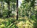 Długota (Opawskie Mountains), 2020.09.11 11.jpg