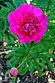 DSC00517 - Entrance Flower (48167754792).jpg