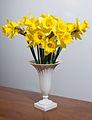 Daffodils (5572313049).jpg