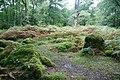 Dewerstone Wood - geograph.org.uk - 1534791.jpg
