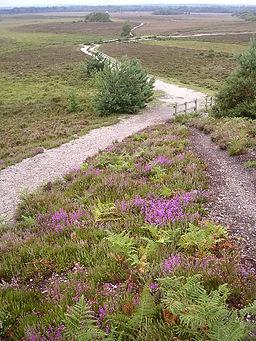 Dibden Bottom, New Forest - geograph.org.uk - 32388
