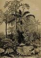 Die Pflanzendecke der Erde - populäre Darstellung der Pflanzengeographie für gebildete Naturfreunde (1859) (20938992455).jpg