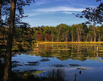 Wetland, Woodbourne Forest and Wildlife Preser...