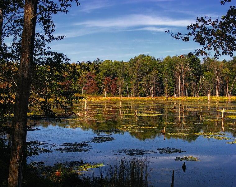 File:Dimock Township Wetland.jpg