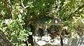 Dinopark, Funtana, Croatia (dinopark.hr) - panoramio (12).jpg