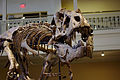 Dinosaurs in Their Time, Carnegie Museum of Natural History, 2013-12-14 03.jpg