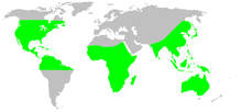 Distribution.ctenidae.1.png