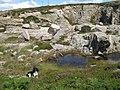 Disused granite quarry - geograph.org.uk - 1439500.jpg