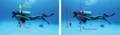 Diver forces.png