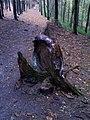 Downed Tree - panoramio.jpg