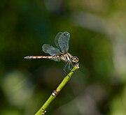 DragonflyJI2.jpg
