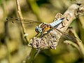 Dragonfly (18456439825).jpg