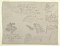 Drawing, Botanical Studies, seen from the Rio Magdalena, Colombia, 1853 (CH 18197991).jpg
