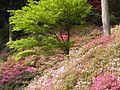 Dscn0299 japan nature.jpg