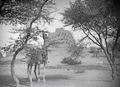ETH-BIB-Das Grabmal von Askia bei Gao, hier liegt ein Songhai-König begraben-Tschadseeflug 1930-31-LBS MH02-08-0546.tif
