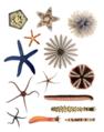 Echinodermata.png