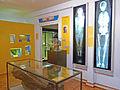 Egyptologie-Musée d'histoire naturelle et d'ethnographie de Colmar.jpg