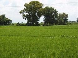 Экачакра дхарм, место, где, как говорят, останавливались Пандавы.
