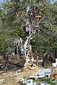 El árbol de los milagritos.jpg