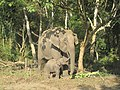 Elephant family at Nameri Eco Camp, Tezpur, Assam.jpg