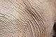 Elephant skin (3689577529).jpg