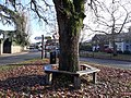 Elstead Green 03.jpg