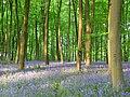 Embley Wood - geograph.org.uk - 800680.jpg