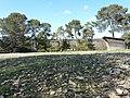 Enclos d'herbivore (2363305077).jpg