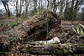 Epping Forest High Beach Essex England - Fallen tree debris.jpg