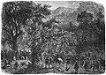 Expédition brésilienne pour Matto-Grosso. Campement de la division expéditionnaire dans les forèts vierges de Goyaz, à Rio des Bois. - D'après un croquis envoyé par M. Paranhos junior.jpg