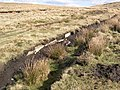 Exposed edge stones of buried Causeway - geograph.org.uk - 623492.jpg