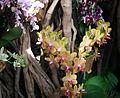 Exposition mille et une orchidées 9.jpg