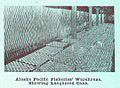 FMIB 44873 Alaska Pacific Fisheries'- Warehouse, Showing Lacquered Cans.jpeg