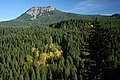 Fall Color along Highway 25-Gifford Pinchot (23823125362).jpg