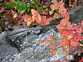 Fall colors (1afcf82193cd4c2d9d82c256f6d64041).JPG