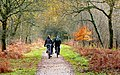 Family cycling in the Forest of Dean - geograph.org.uk - 1591472.jpg