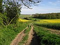 Farm track and byway to Crundale church - geograph.org.uk - 790037.jpg