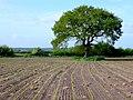 Farmland near Fossil Coppice - geograph.org.uk - 1308284.jpg