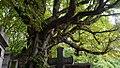 Faune du Cimetière du Père-Lachaise.jpg