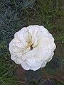 Fehér virág.jpg