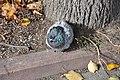 Feral pigeon in Zelenograd 02.jpg