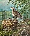 Ferdinand von Wright - Fåglar i boet.jpg