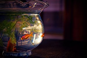 English: The fish bowl ???: ???