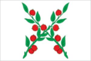 Chaplygin, Lipetsk Oblast - Image: Flag of Chaplygin (Lipetsk oblast)